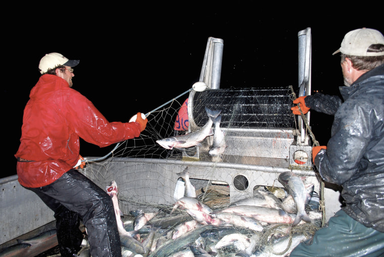 Crewmembers pull in a driftnet loaded with sockeye salmon in Bristol Bay, near Egegik, Alaska, in 2009.