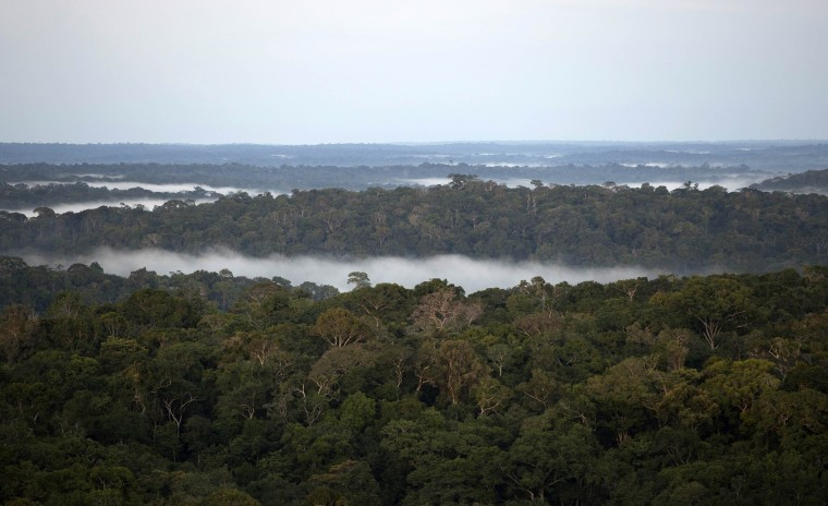 Image: Amazon Tall Tower Observatory in the Amazon forest