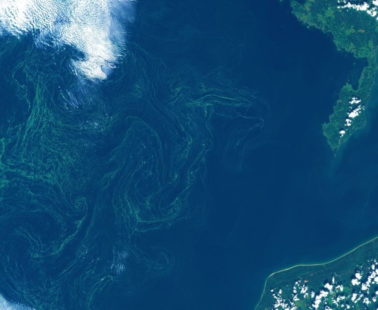 Beautiful But Toxic Algae Swirl in Stunning Satellite View of Baltic Sea