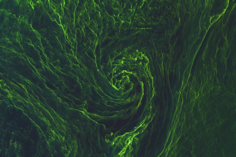 An algal bloom in the Baltic Sea, captured by the ESA's Sentinel-2A satellite on August 7, 2015.