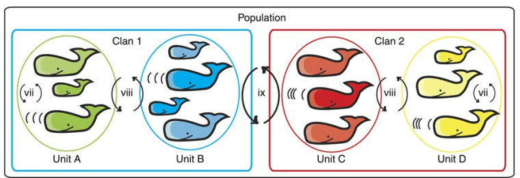 Figure from the paper illustrating how various smaller groups (families, groups of nearby whales) may form or belong to groups on several levels of organization.
