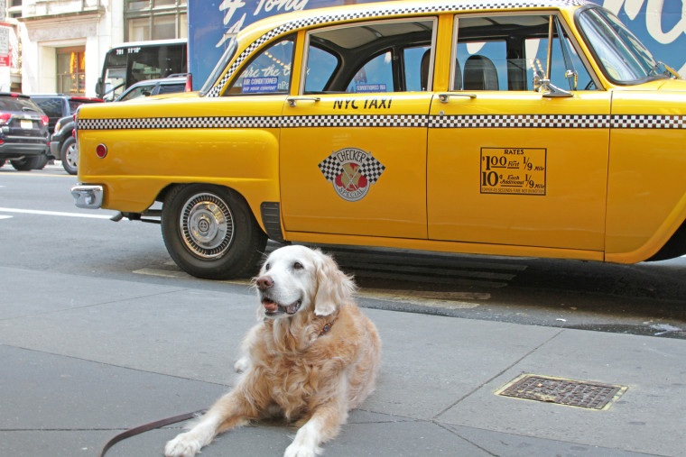 Bretagne and her parents got to ride around in a vintage NYC taxi provided by FilmCars.