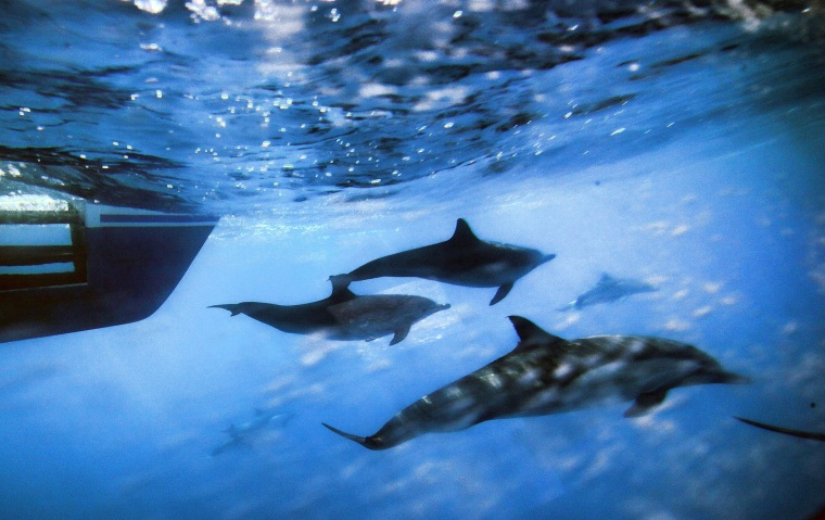 Image: Dolphins
