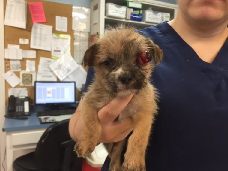 Before Maria Williamson adopted the cute puppy, Bear, he needed a surgery to remove an injured eye.