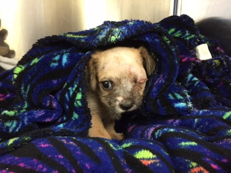 Shooting victim Maria Williamson adopted the cuddly puppy Bear, who had a surgery to remove an injured eye.