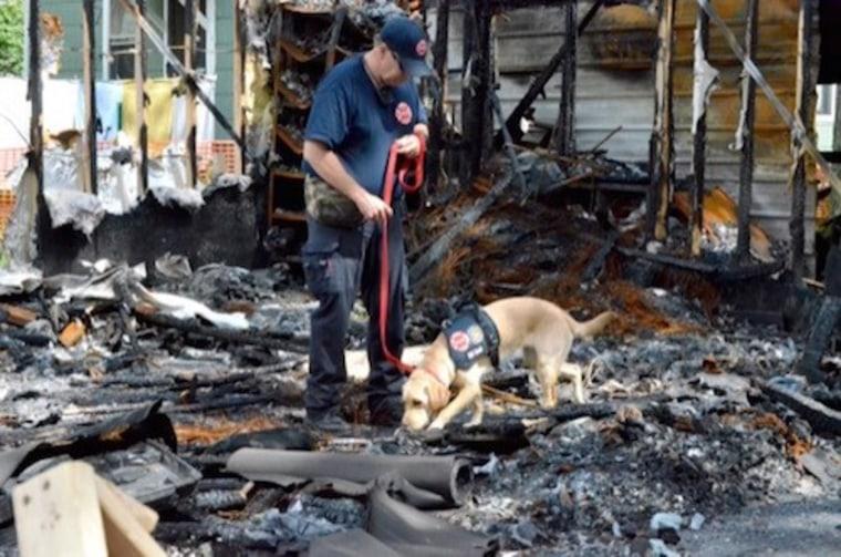 Glory the arson dog