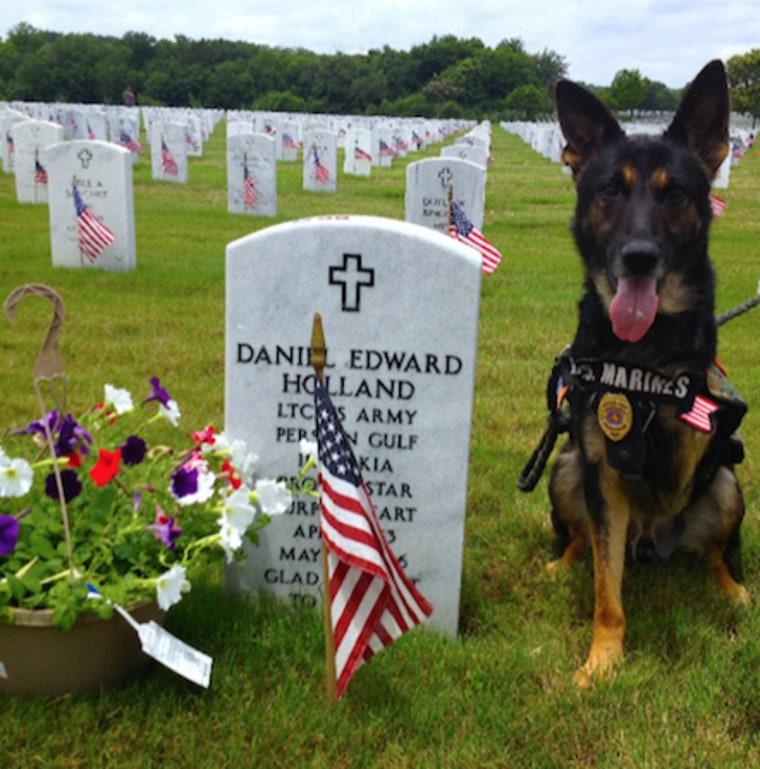 Rambo the military working dog
