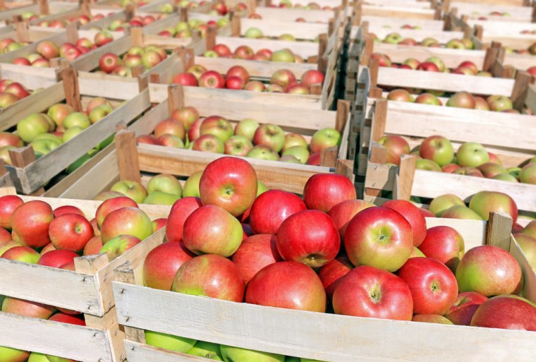 Cart full of apples after picking