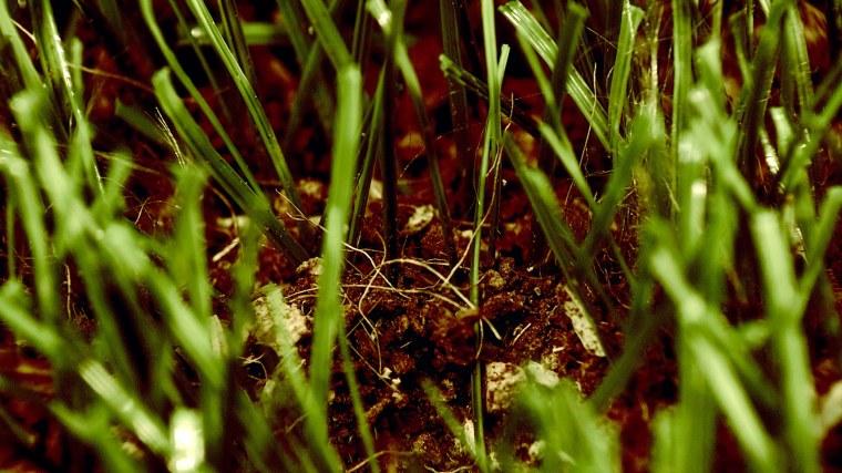 Image: organic turf mix