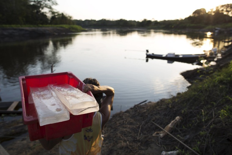 Image: A resident carries ice blocks produced on solar-powered ice machines at Vila Nova do Amana community in the Sustainable Development Reserve, in Amazonas state