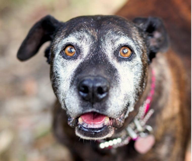 "Fiona, a senior dog featured in the new book ""My Old Dog"""