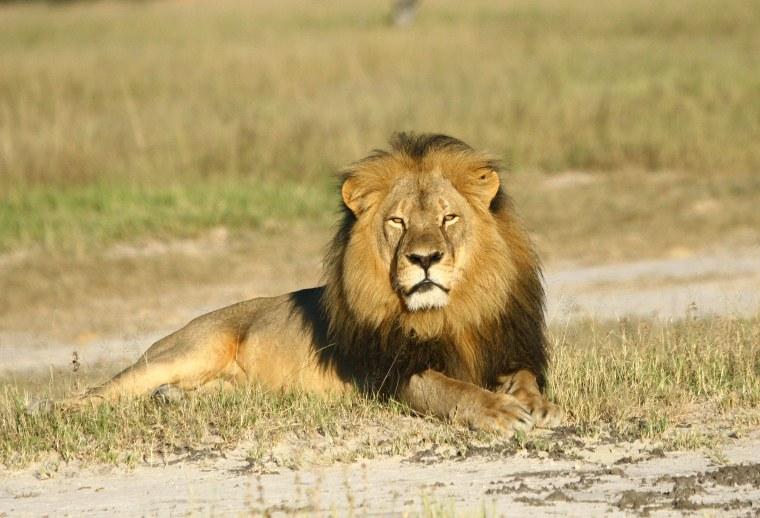 Image: Cecil the lion