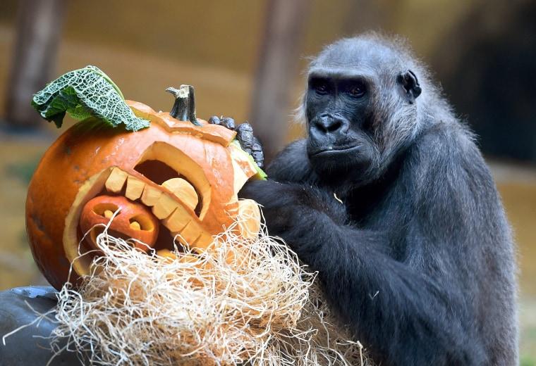 Image: Halloween in Hanover Adventure Zoo