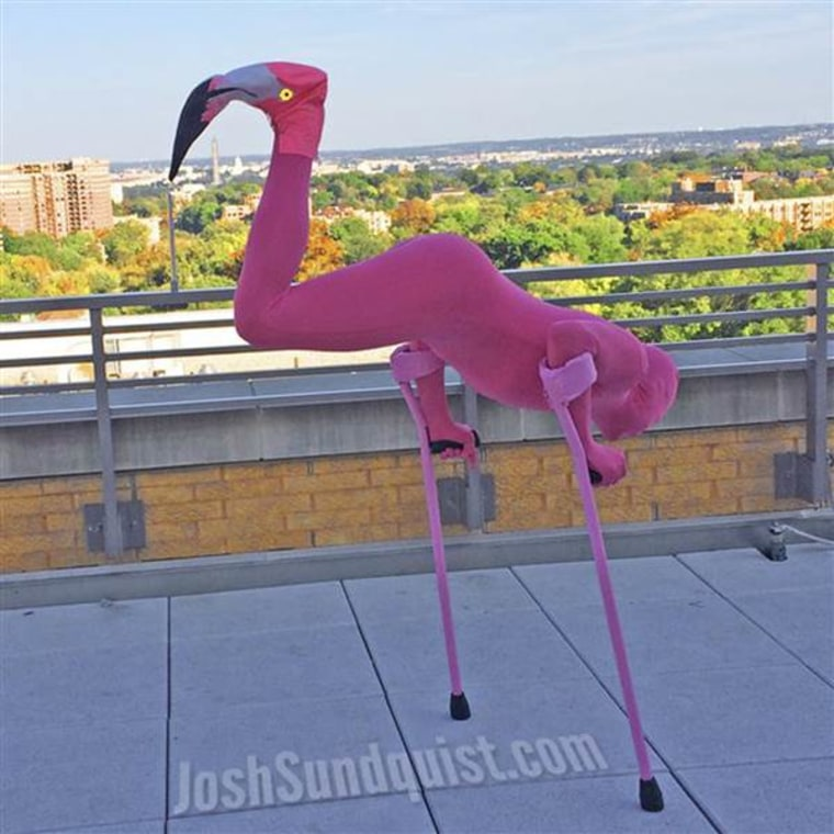 In 2013, Josh Sundquist observed Halloween as a flamingo.