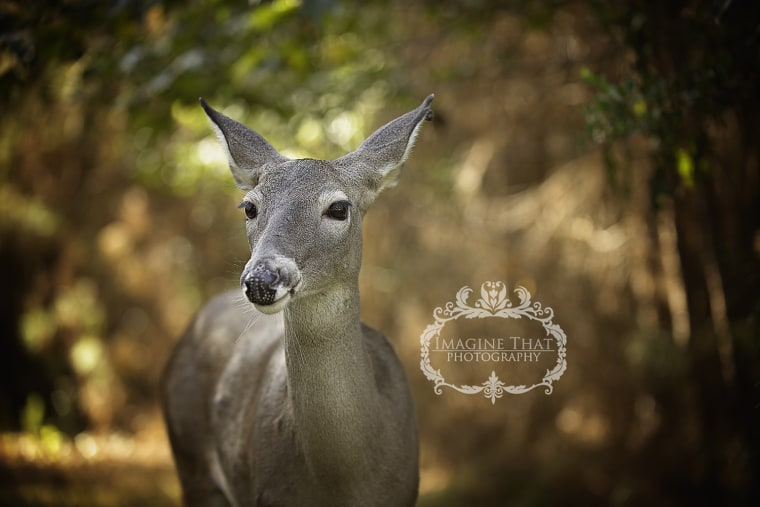 Deer in professional photo