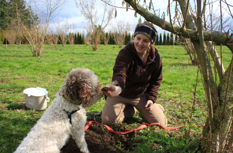 The Truffle Dog Company (TDC) leads training programs for dogs.