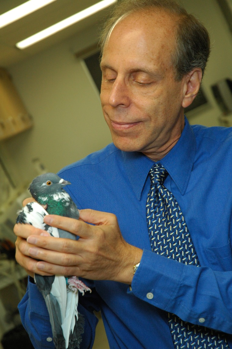 Edward Wasserman of the University of Iowa and one of his pathologist pigeons