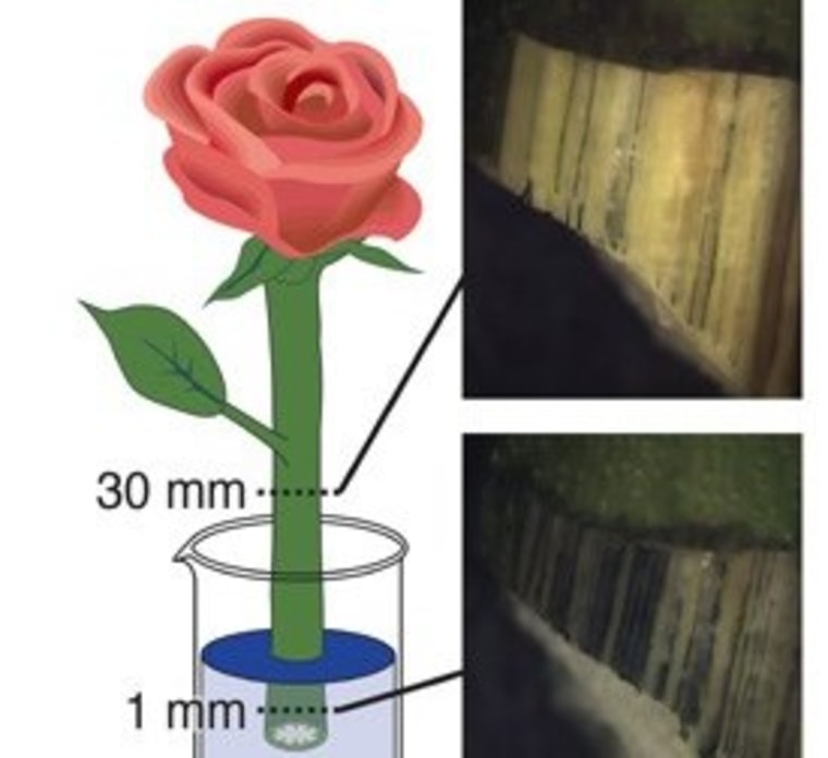 'Electronic Plants' Grow Wires Inside Themselves to Form Living Machines