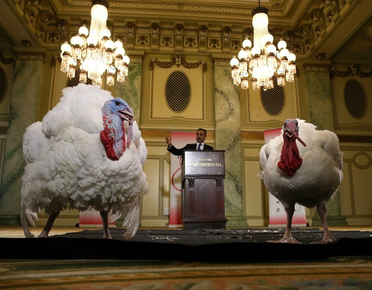 Image: National Thanksgiving Turkey Presented To Media Ahead Of Wednesday's White House Pardon