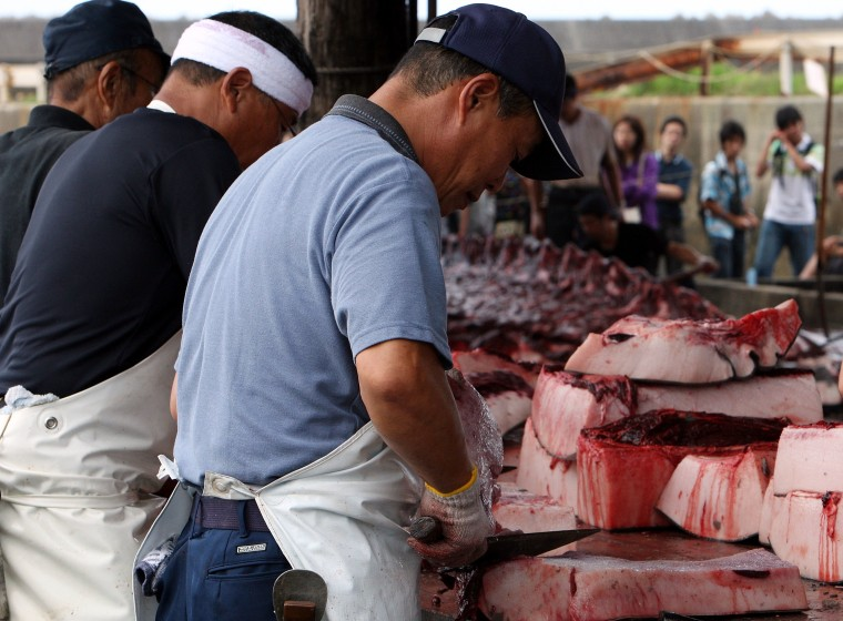 Fishermen Process Whale Caught In Approved Coastal Whaling