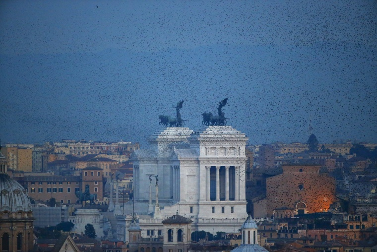 Image: A flock of starlings flies in the dusk sky over Rome, Italy