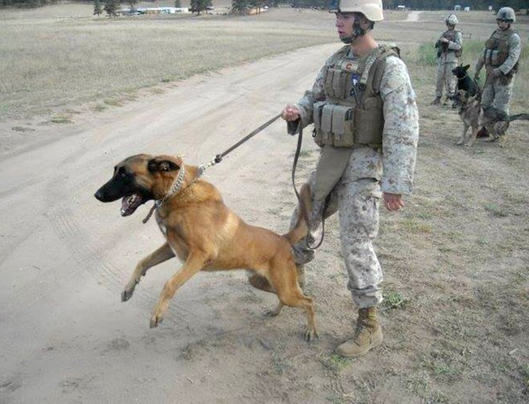 David Pond with the military working dog he served with in Afghanistan.