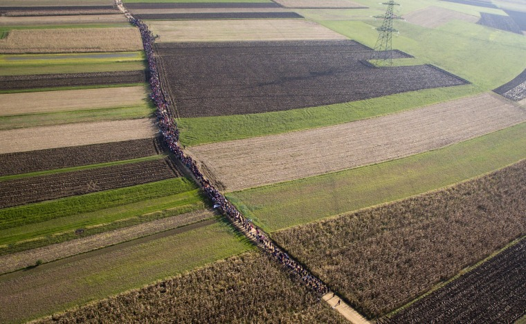 Image: A column of migrants moves through fields after crossing from Croatia