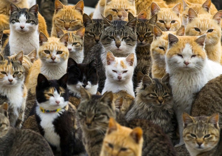 Image: Cats crowd the harbor on Aoshima Island