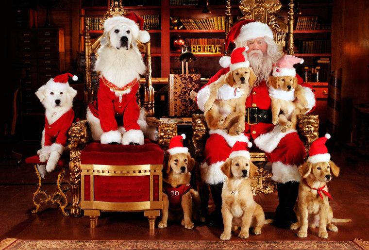 Four-legged Santas