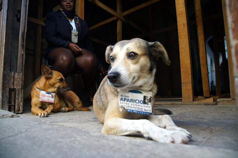 Victoria Lescay, a museum security guard in the area of Old Havana, in Cuba, with her two guard dogs, Canelita (which means little cinnamon) and Aparicio, December 2015.