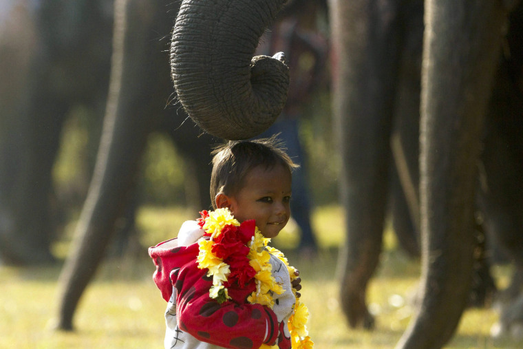 Image: 12th Chitawan Elephant Festival
