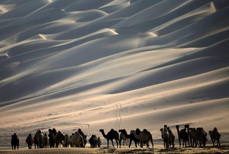 Image: UAE-CAMEL-FESTIVAL