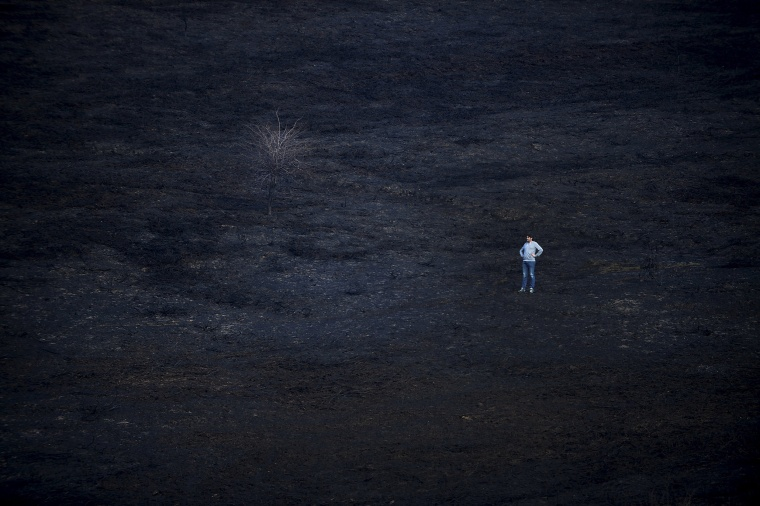 Image: A man stands in the middle of a burnt forest following a bushfire near the Basque town of Berango