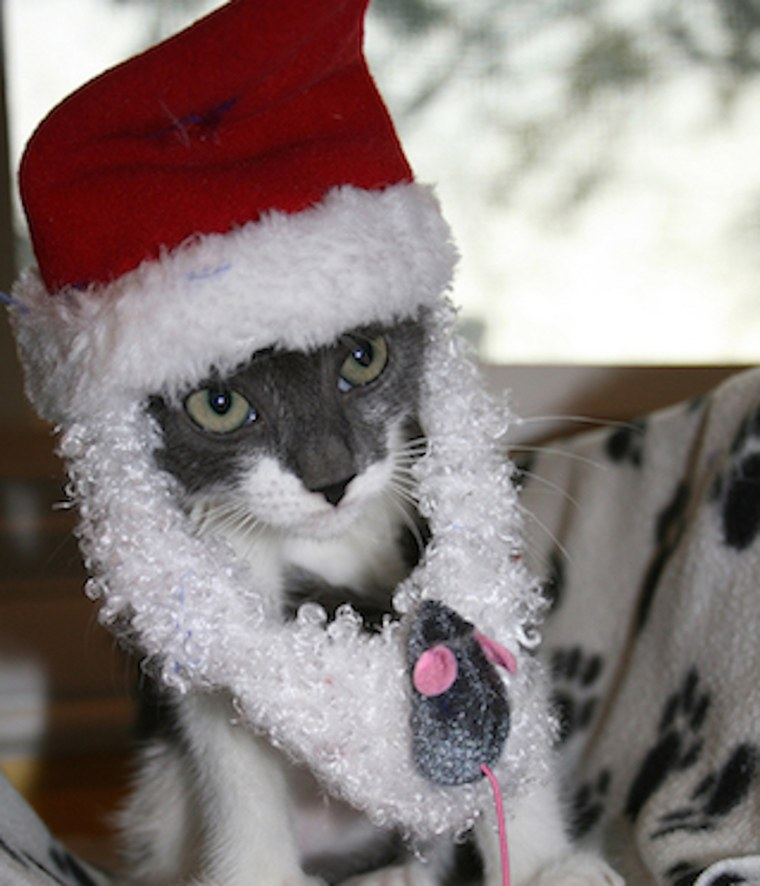 Gunnison, a kitten with bone cancer, received support from people donating more than $5,000 for his treatment