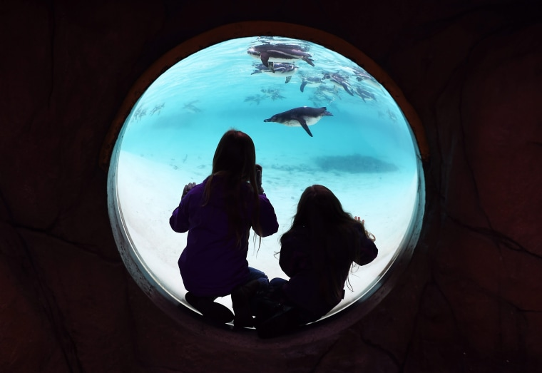 Image: Young visitors look at penguins