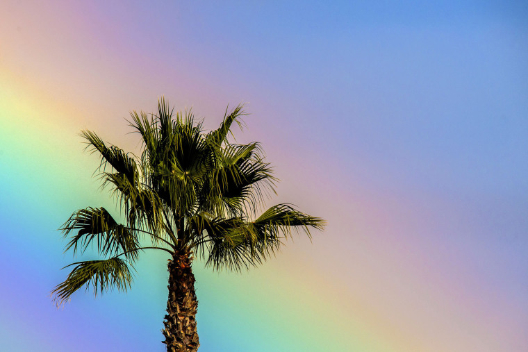 Image: A rainbow casts its glow behind a palm tree near the Seal Beach Pier