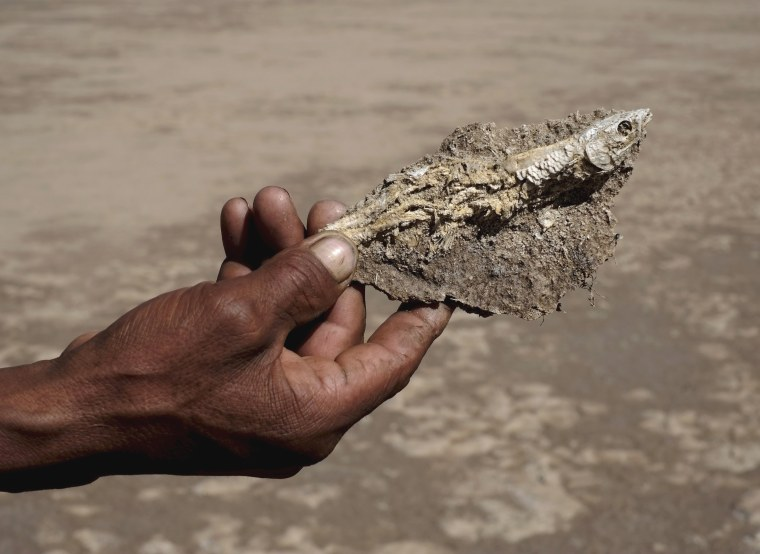 Image: A fisherman holds a fish taken from dried Poopo lakebed in the Oruro Department, south of La Paz
