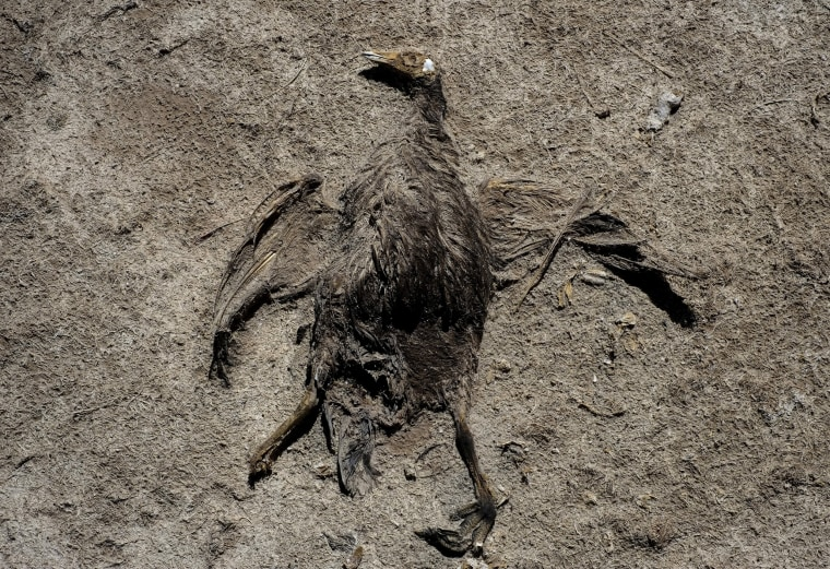 Image: The carcass of a bird is seen on the dried Poopo lakebed in the Oruro Department, south of La Paz, Bolivia