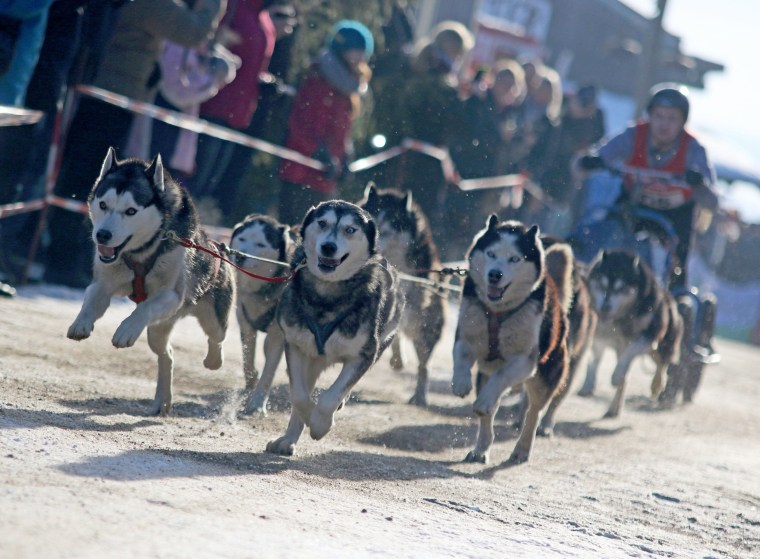 Image: Dog sled racing in Germany