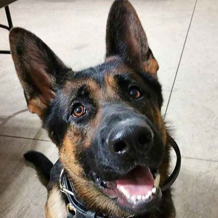 Jethro, the police dog.