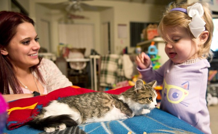 """She knows, despite her young age, that this cat is special to her,"" said Tipton."
