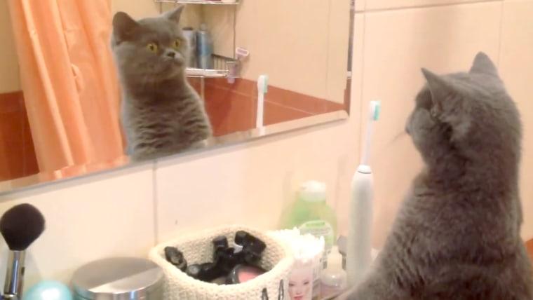 cat-admires-self-in-mirror-today-160108