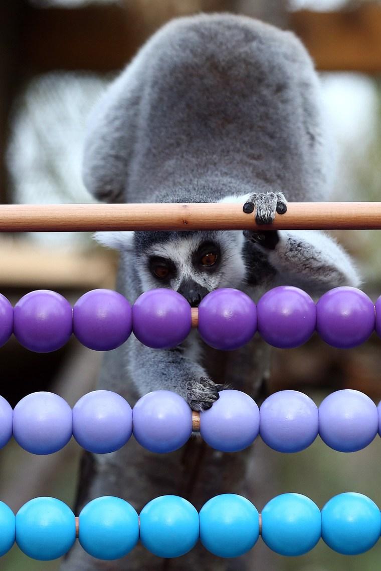 Image: Annual Animal Stocktake At London Zoo