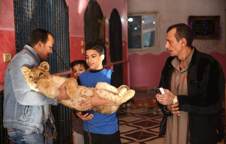 """Image: Home turned into \""""Zoo\"""" in Egypt"""