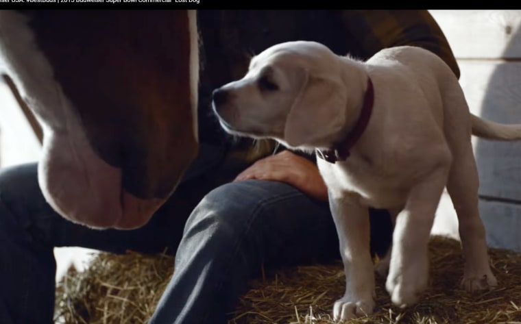 Photo: Budweiser's 2015 Super Bowl commercial.