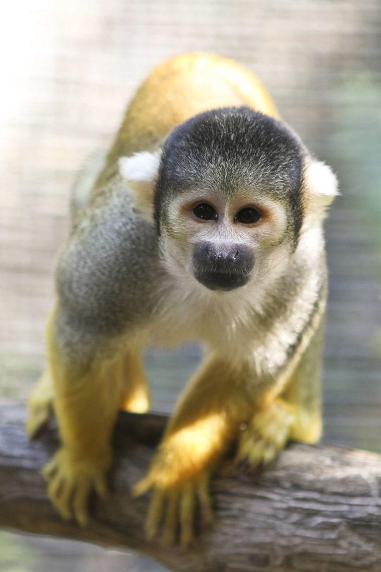 Image: Amazonia exhibition at Perth Zoo