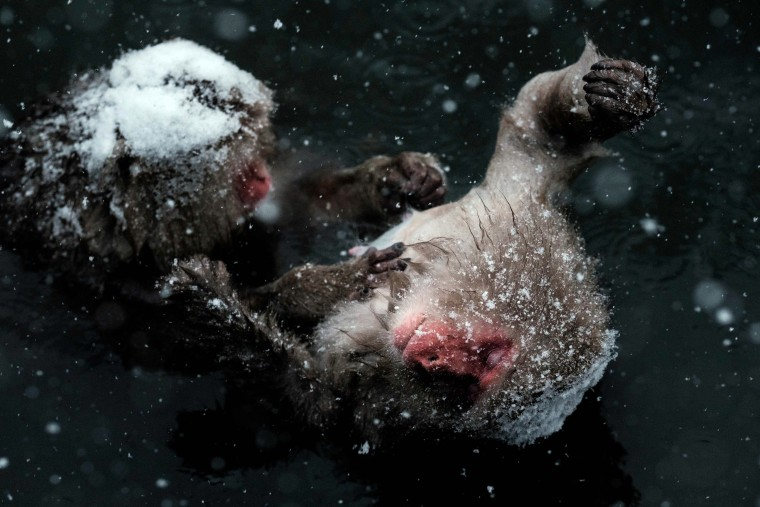 Image: TOPSHOT-JAPAN-ANIMAL-SNOW MONKEY