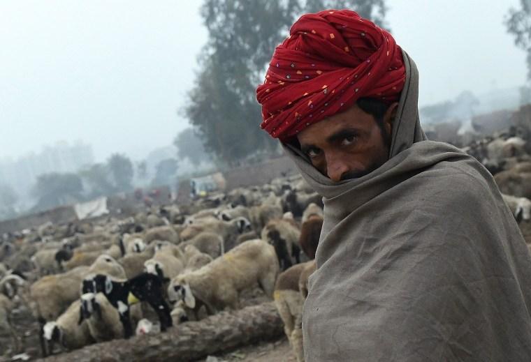 Image: TOPSHOT-INDIA-LIFESTYLE-NOMADS-HERD-SHEEPS
