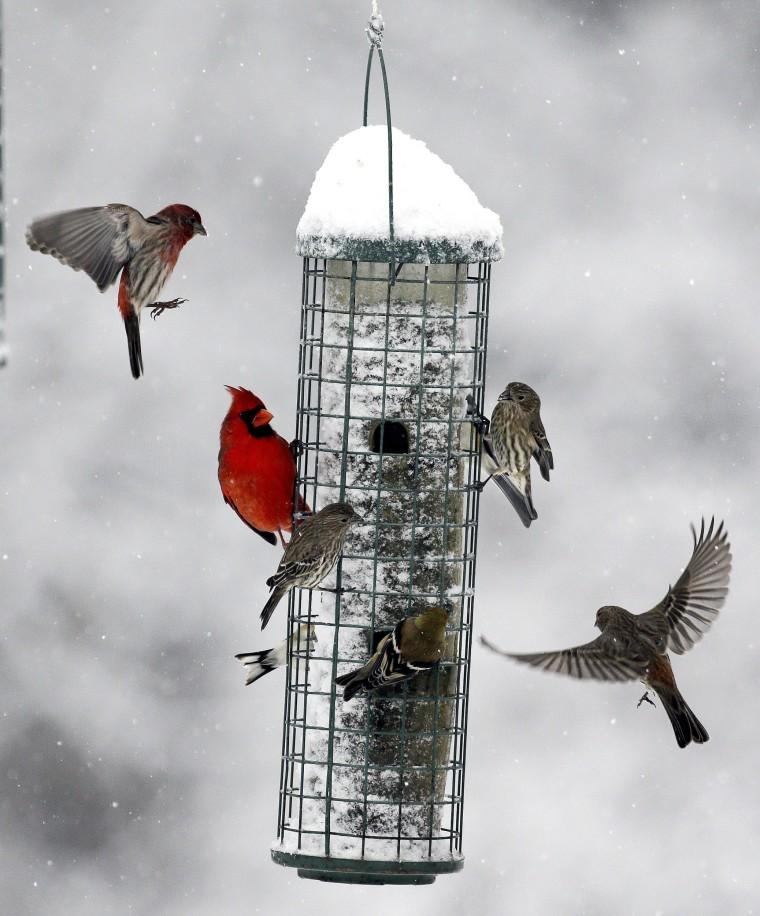 Image: Birds flock to a feeder as snow falls