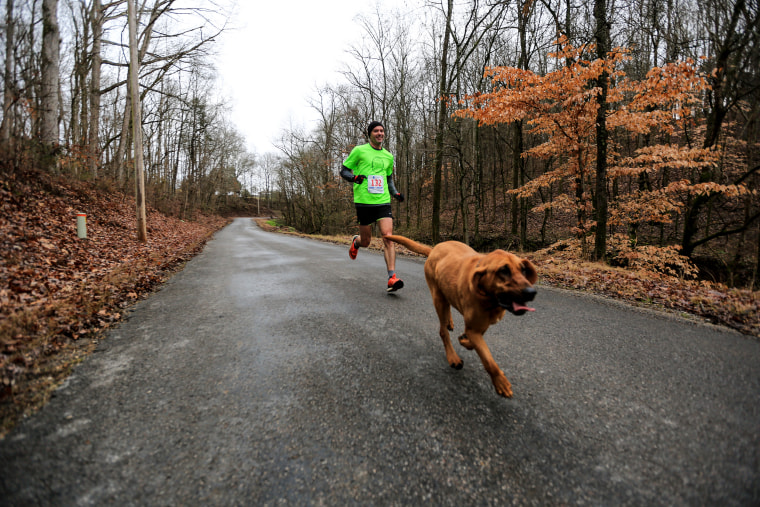 """I think she probably averaged seven minutes per mile,"" said Henry, impressed by the hound's ability to finish the tricky 13.1-mile trek.